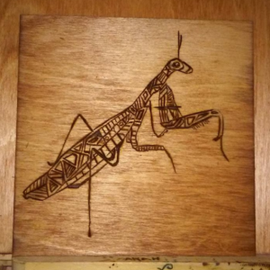 "Praying Mantis - Pyrography Woodburning - 6"" x 6"""
