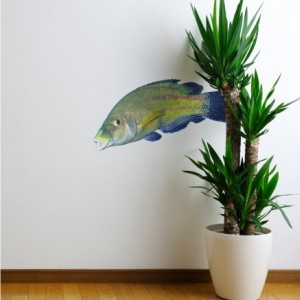 Rainbow Wrasse Fish Sea Life Decal - Coris