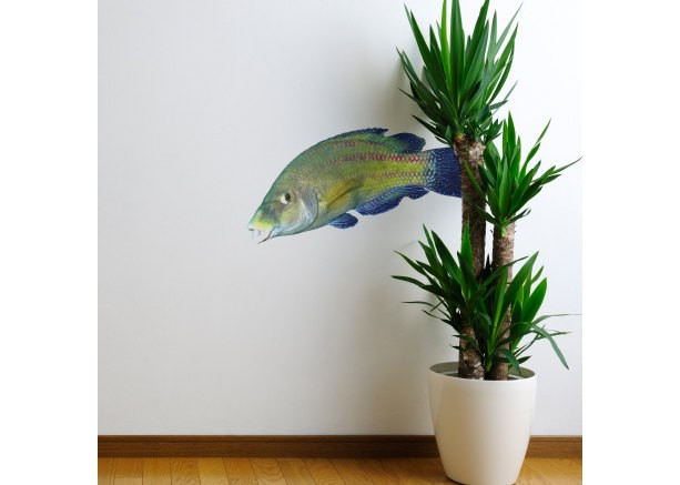 Rainbow Wrasse Fish Sea Life Decal - Coris