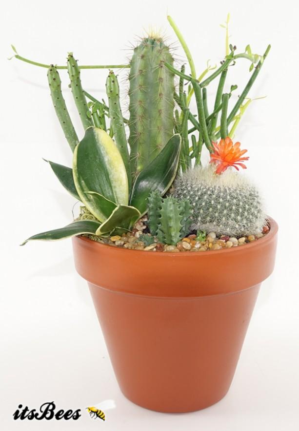 """Small 4"""" Terracotta Cactus Garden - Succulent, Haworthia - Housewarming, Gift"""