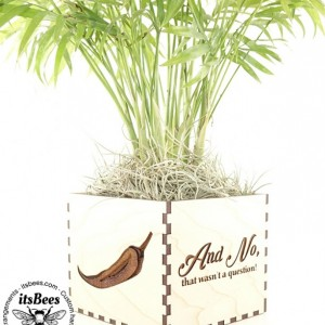 Custom Personalized Wood Planter - Pick Your Plant - Laser Cut & Engraved - Personalized Message, Logo, Name, Image - Wedding, Company, Gift - Palm, Braided Money Tree, Hoya Rope, Succulent, Cactus