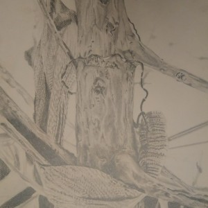 Scarf in the Tree Graphite Drawing