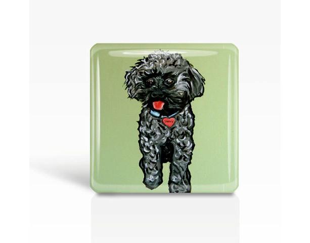 "DOG Art- Rescued Dog ""Danny"" - Glass MAGNET By Artist A.V.Apostle- 2""x 2"""