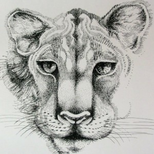 Pen & Ink Drawing of an African Lioness