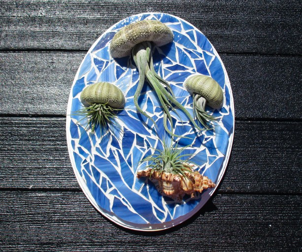 Air plants, air plant gift, Air plant holder, Air plant hanger, plant lovers gift, Mosaic wall, Gift for mom, Jellyfish air plant, jellyfish
