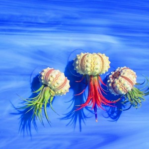 Air plants, Air plant holders, air plant set, Air plant gift, Plant lovers gift, Jellyfish air plant, air plant jellyfish, boho gift, plants