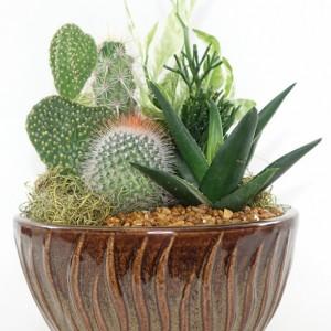 "Small 6"" Ceramic Garden - Cactus, Succulent, Haworthia, Aloe - House, Gift"
