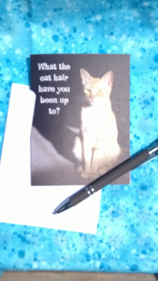 Orange Stripe Sitting Cat Photo Greeting Cards-