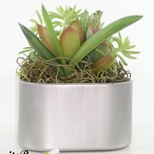 "Mini Live Air Plant Garden Magnet 2"" - Cactus, Haworthia, Aloe, Succulents"