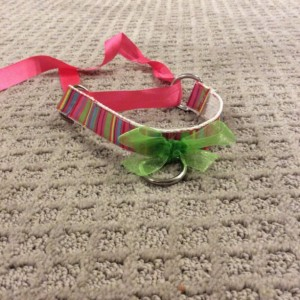 Design Your Own Pet Play Collar