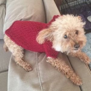 Dog Outwear-Apparel/Coats/Sweaters-Sizes-XSmall,Small,Medium,Large,XLarge dogs,Dog custom made apparel/outerwear/sweaters/coats,Handmade!