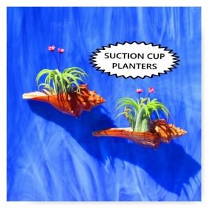 Air plants, Shell Planter, Wall Planter, Air Plant Hanger, Air Plant Wall,  Hanging Planter, Air Plant holder, Air plant display, Live Plant