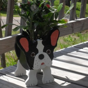 "Boston Terrier Planter Box, ""Buster"""
