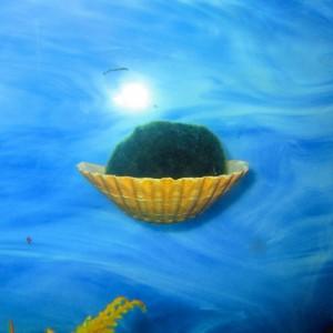 Marimo Moss Ball Holder, Aquarium Plant holder, Fish Aquarium Décor, fish tank
