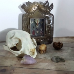 Mini Altar Natural History Bird Skull Terrarium Nicho Box