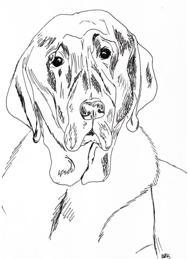 Chocolate Lab Labrador Retriever Dog Black and White Original Art Illustration Drawing Ink Nature Pet Animal Home Decor 7 x 10