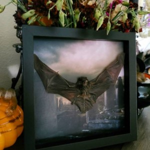 Hallows eve!! Bat display // one of a kind!!