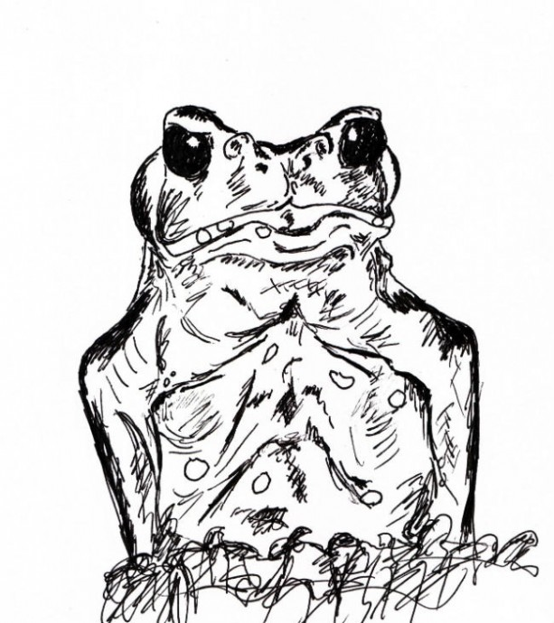 Frog Toad Amphibian Black and White Original Art Illustration Drawing Ink Nature Animal Decor 6 x 6.5