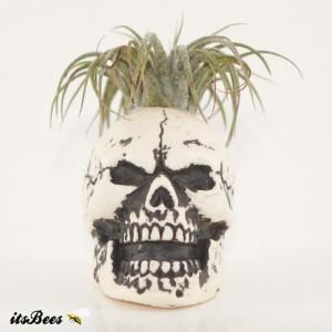 """Mini 2"""" Skull Planter - Air Plant, Succulent, Cactus, Haworthia"""