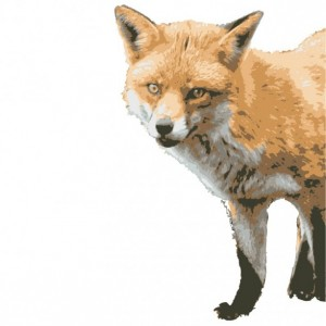 Fox Peering Around Wall Vinyl Decal