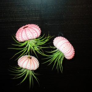 3 Sea Urchin Hanging Jellyfish w/Air Plant No Assembly Required Ready to Gift