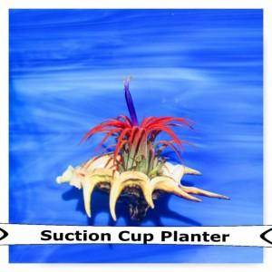 Air Plant, Plant gift, air plant wall, air plants, Air fern, plant lover, Valentines day, Valentines, Valentines day gift, Air plant planter