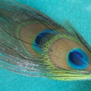 Peacock Feather Hair Comb