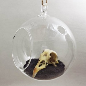 Witch Globe with real Bird Skull and Wing
