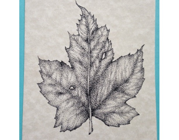 maple leaf blank note cards