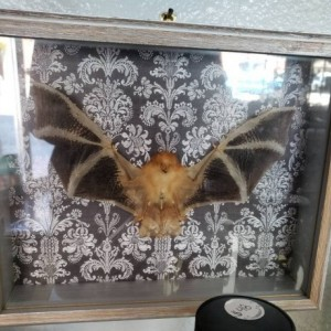Wunderland shadowbox // Painted bat // victorian gothic // decor