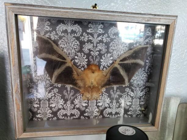 Wunderland shadowbox // Painted bat // victorian gothic // decor
