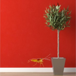 Cleaner Shrimp Sea Life Wall Decal