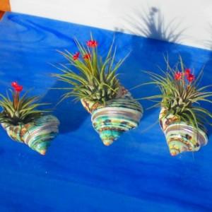 AIR PLANTS, air plant holders, air planters, air plant gift, plant lovers gift, air plant bulk, air plant planters, air planters, Valentines