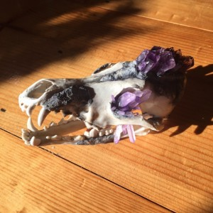 Amethyst Crystal Skull Coyote Taxidermy