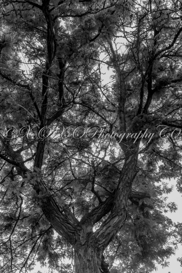 Black and White Tree Print