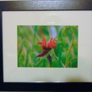 Smokey Mountian Flower Photograph - framed matted nature photo