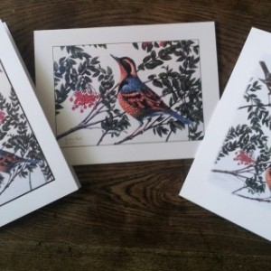 Varied Thrush note cards