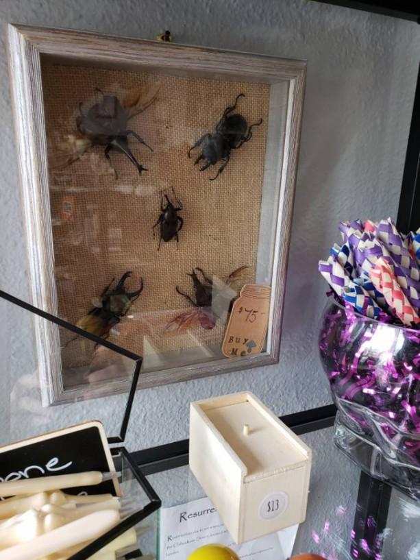 Wunderland Shadowbox // Multi beetle frame