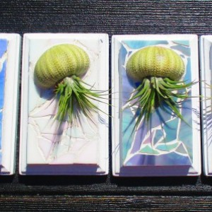 4 Air Plant Air Planters Wall Art  Mosaic Wall Planters, Air plant jellyfish, Jellyfish air plant, Sea Urchin Plants as pictured