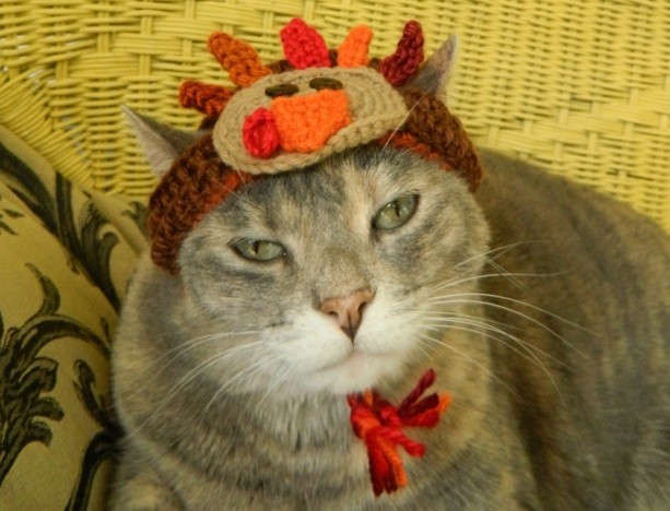 thanksgiving turkey crocheted hat for your cat or small