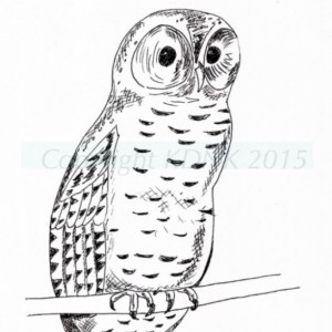 Owl Black and White Original Art Illustration Drawing Ink Nature Bird Decor 7.5 x 10.5 Nature Lover Bird Watcher Woodland Animals Wildlife