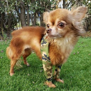 "PETITE 16""-19"" Canine Pee Pants - Dog Leggings, Waterproof Front Leg Covers"