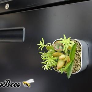 "Mini Live Succulent Garden Magnet - 2"" - Cactus, Haworthia, Aloe, Air Plants"
