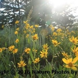 In the Rays of the sun (a flower photo) photo print