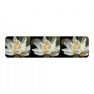 Photo cuff bracelet, aluminum, Wondrous Water Lily, fine art for your wrist, HueDew