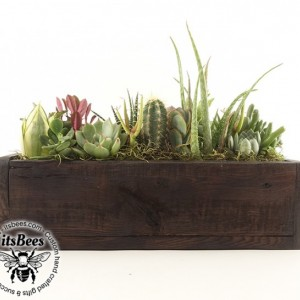 Narrow Succulent Garden - Recycled Wood Planter - Cactus, Haworthia, Aloe, Sedum - Housewarming, Home, Office, Window, Gift
