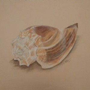 Seashell Chalk Illustration