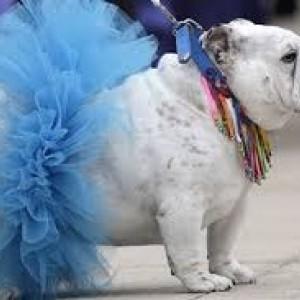 Doggy Tutus