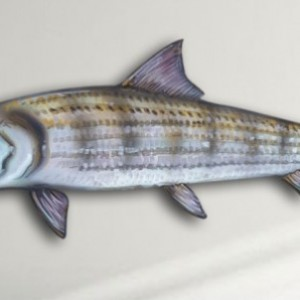 "14"" Bonefish Salt Water Game Fish Replica, Wall Mount, Decor, Nautical Art, Gift"