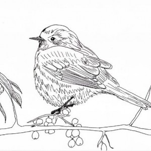 Bird Finch Sparrow Berries Berry Branch Black and White Original Art Illustration Drawing Ink Nature Animal Home Decor 11 x 7.5